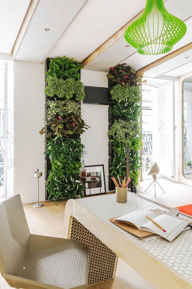 Claustra végétal au mur